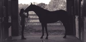 quel-cheval-pour-quel-cavalier